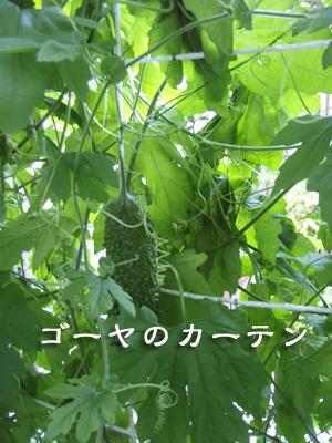 20080810-20080810b.jpg