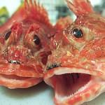 ゴールドコーストで魚を食べる!