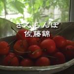 京都の実家滞在記 – 朝の収穫編 –