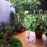 雨とミジー