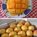 マンゴーの季節到来