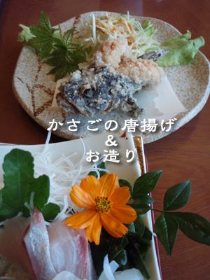 20080812-20080812b.jpg