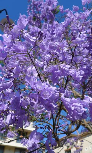 20091106-20091106b.jpg